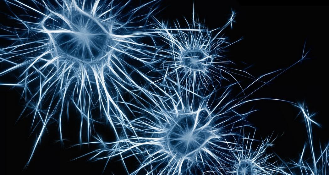 ces-neurons